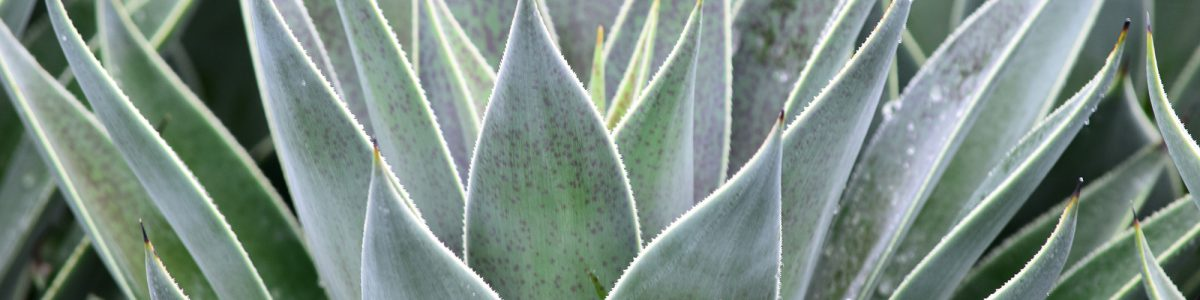 GREEN LAKE NURSERY® | Wholesale Nursery Plant Grower