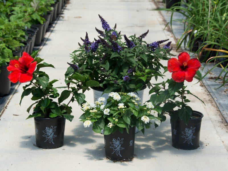 Green Lake Nursery Wholesale Nursery Plant Grower